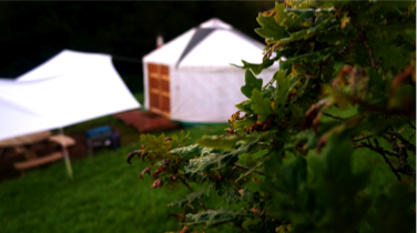 A gorgeous yurt glaming area, torbay